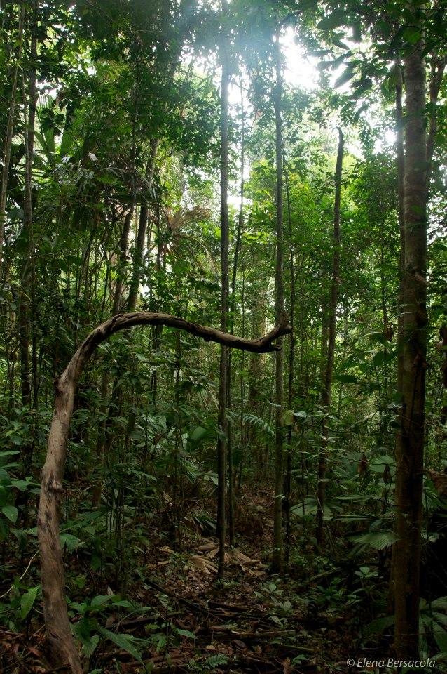 Jádro oblasti Sungai Wain Protection Forest je největší oblastí obnovy primárního nížinného deštného pralesa v prostoru Balikpapan-Samarinda, který přežil katastrofální lesní požáry v roce 1998. Na nějakou dobu, to bylo pravděpodobně jedno z nejlépe řízených chráněných území Indonésie. Ale teď je to na základě vážných hrozeb místo bezohledného rozvoje měst a průmyslové expanze.