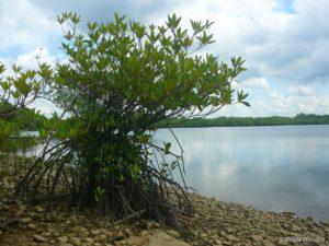 Jedinečnost Balikpapanského zálivu (Balikpapan Bay) je v bohaté rozmanitosti přírodních ekosystémů nacházejících se v bezprostřední blízkosti velkého města. Kromě primárních a sekundárních deštných pralesů jsou zde také různé mořské ekosystémy, včetně korálových útesů a mořských řas. Moře je odděleno od lesa téměř nekonečným pásem mangrovů; V Balikpapanském zálivu je přibližně 170 km čtverečních primárního a sekundárního mangrovníkového pralesa. To je základní přirozené prostředí kahau nosatých.