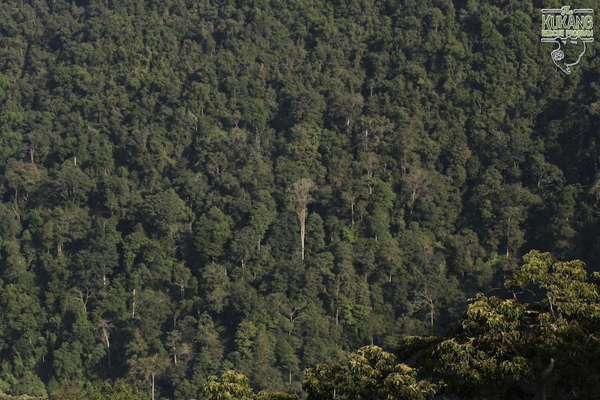 Primarní prales v Tanah Karo